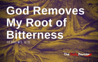God Removes My Root of Bitterness - Hebrews 12:15