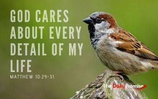 God Cares About the Details of My Life - Matthew 10:29-31