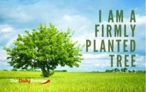 I Am a Tree Firmly Planted - Psalm 1:3