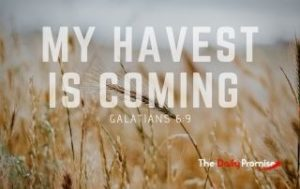 My Harvest is Coming - Galatians 6:9